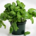 Овощи и зелень круглый год